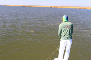 Fish on the flats